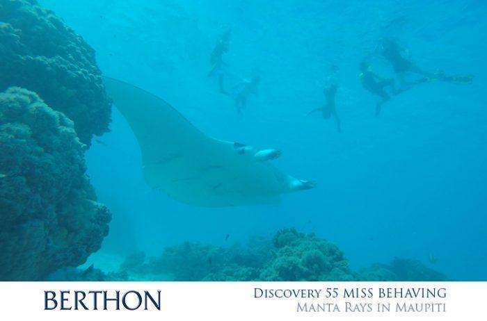 discovery-55-miss-behaving-manta-rays-in-maupiti