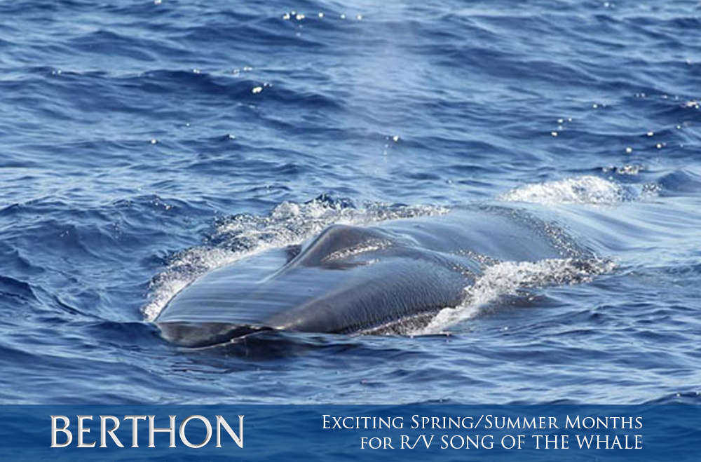 exciting-spring-summer-months-for-r-v-song-of-the-whale-7