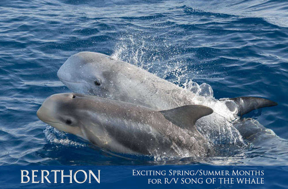 exciting-spring-summer-months-for-r-v-song-of-the-whale-8