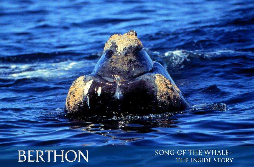 SONG OF THE WHALE – the inside story