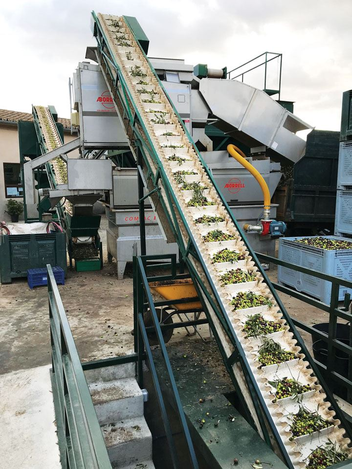 10-olives-heading-to-the-press